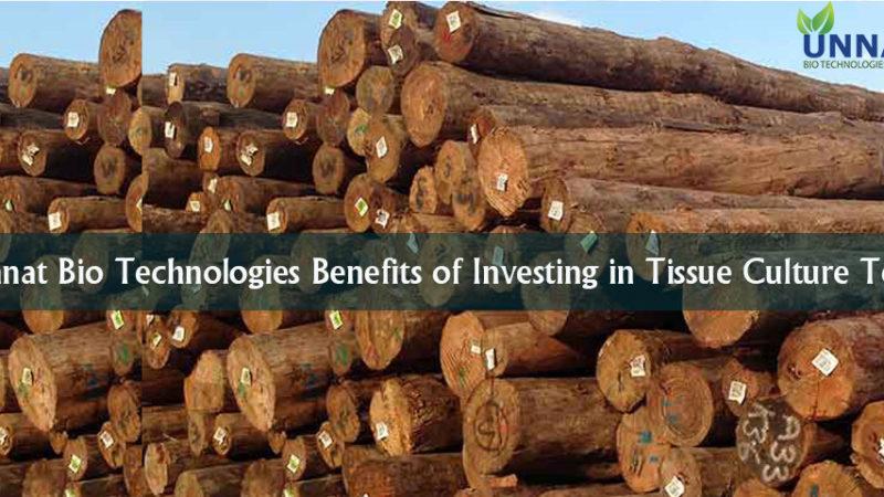 Unnat Bio Technologies Benefits of Investing in Tissue Culture Teak